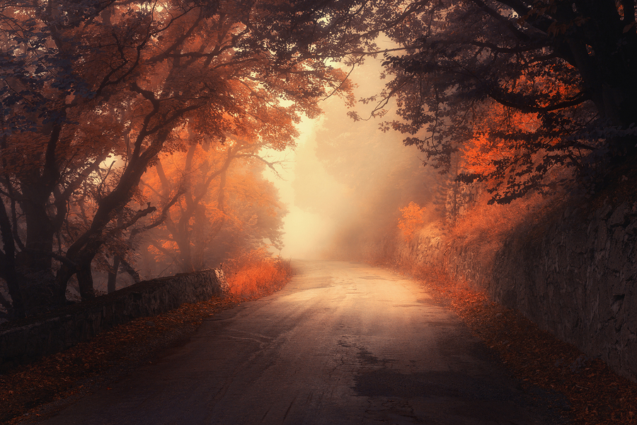 Mystical autumn red forest with road in fog. Fall misty woods. Colorful landscape with trees rural road orange and red leaves and yellow fog. Travel. Autumn background. Magic dark forest. Fairytale