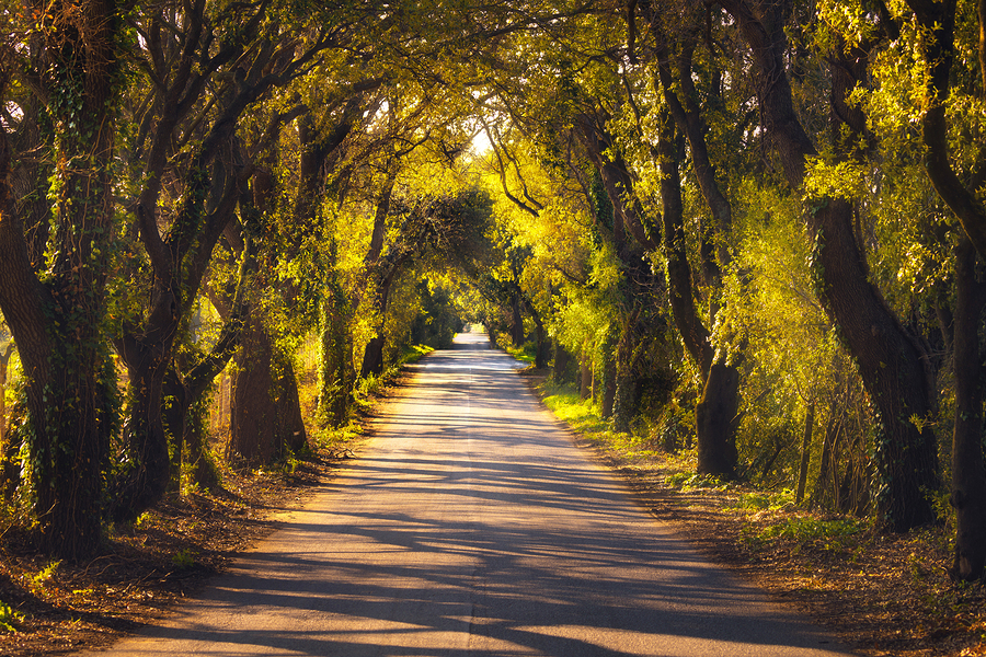 Autumn or fall, trees tunnel road on sunset. Maremma, Tuscany, Italy Europe.