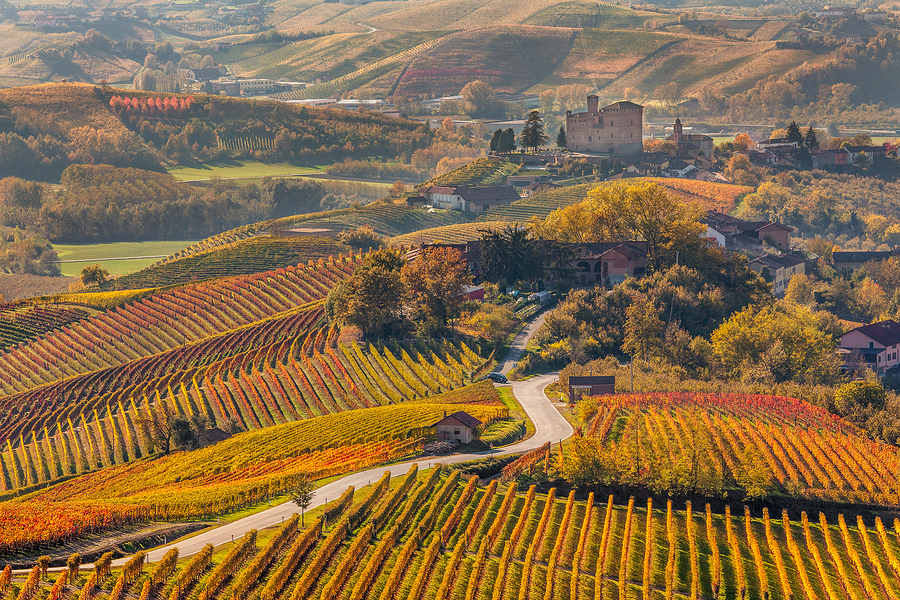 Narrow road through colorful autumnal vineyards in Piedmont, Nor